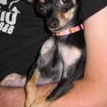 Daddy's Little Girl 2007