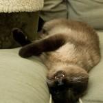 Neo Asleep