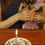 Stella's First Birthday March 2007
