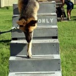 (A) Training on Stairs