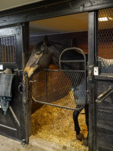 Angela's Horseback riding lesson at Coker Farm in Bedford, NY